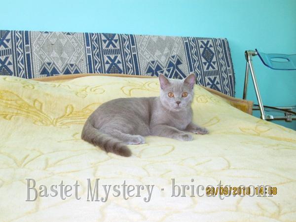 Фото алиментного котенка Ларсона