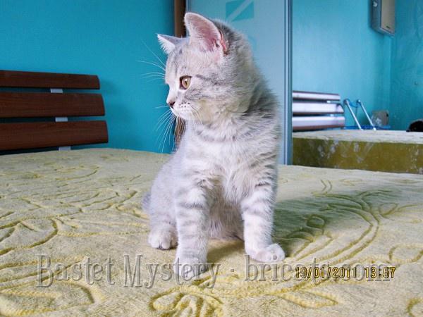 Фото алиментного котенка Ориона